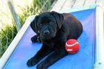 Walker M 1 - Puppy