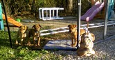 ShelterMakeOver_PuppiesPlayArea
