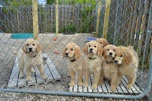Hazard pups 1